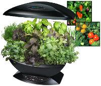 Сад и огород на кухне