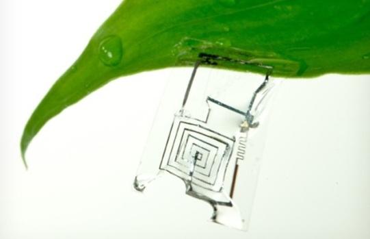 Американские ученые создали растворимые микросхемы