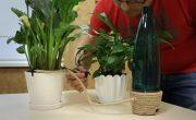 Украинцы создали дистанционную поливалку, контролируемую со смартфона