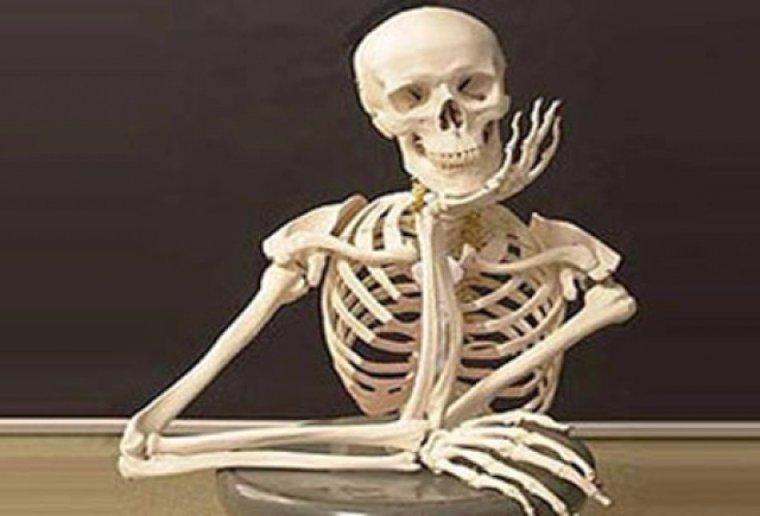 Японцы создали скелет, который практически ничем не отличается от человеческого