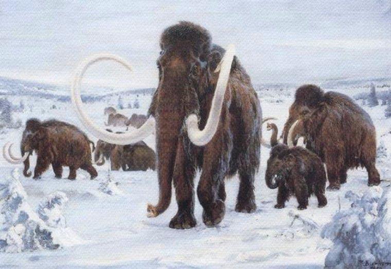 Ученые узнали, что вызвало массовую гибель мамонтов