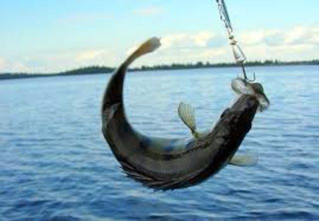 Рыбалка на Волге – мечта каждого рыбака