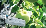 Американская компания создала робота для сбора яблок