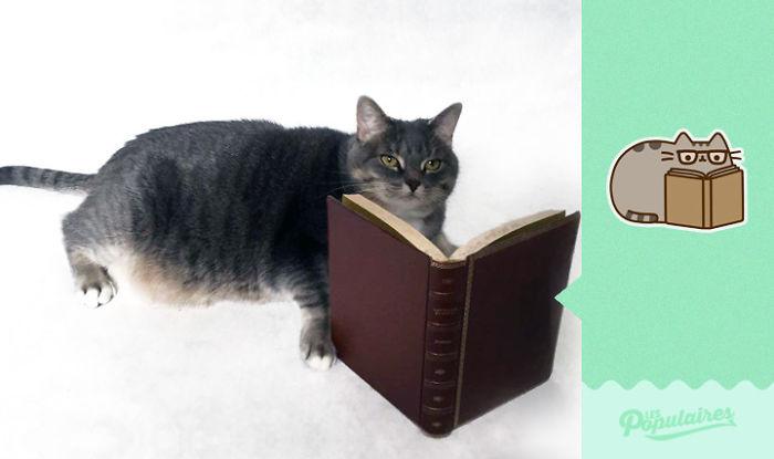Эмодзи-коты и живые коты!