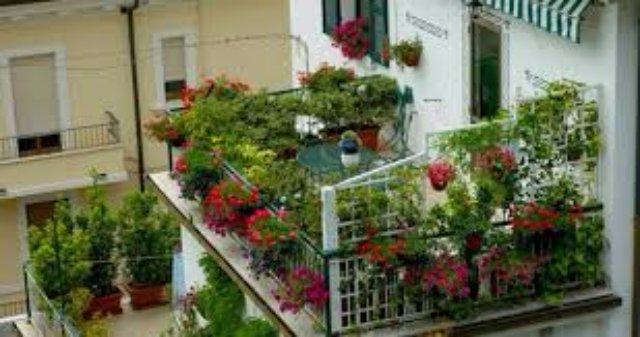 Озеленяем балкон сами