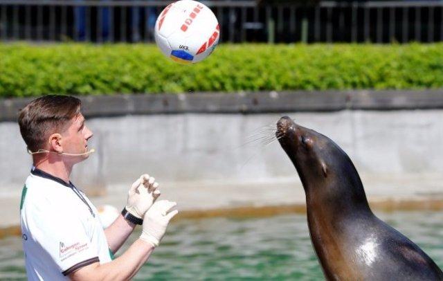 Животные-предсказатели на Евро-2016