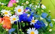 Доставка свежих цветов из Эквадора в Санкт-Петербурге