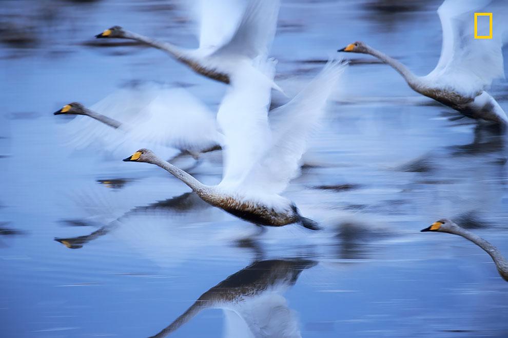 Красота какая! Лучшие фотографии года по версии National Geographic