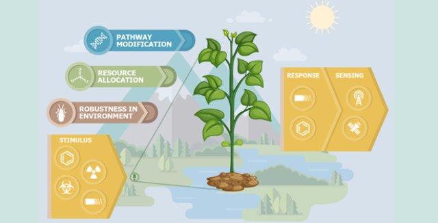 DARPA - это растения, которые действуют как датчики биологической опасности