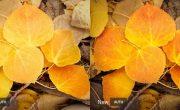 Adobe Lightroom использует ИИ для редактирования ваших фотографий, как профи