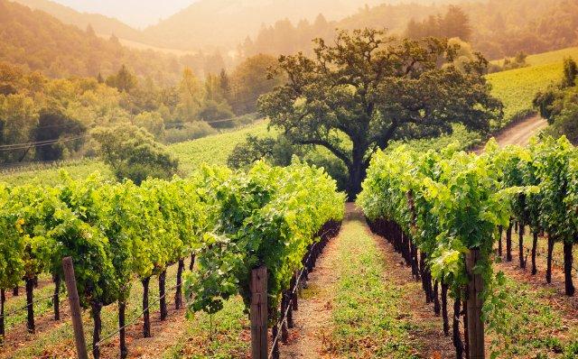 Ирригационные роботы могут помочь выращивать виноград в Калифорнии