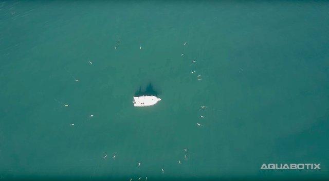 Aquabotix представила водных дронов