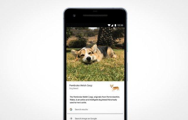Google Lens может идентифицировать породы собак и кошек