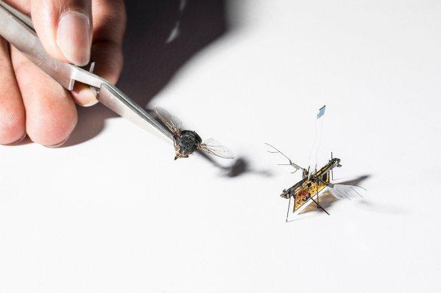 Роботизированное насекомое учится летать на базе лазерных лучей