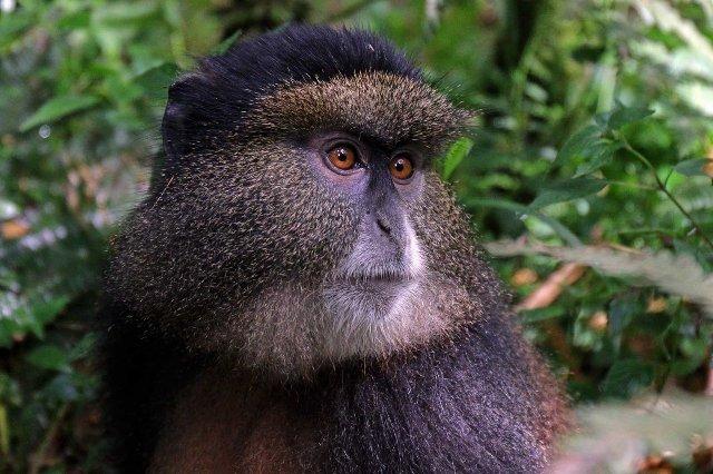 Распознавание лица может помочь спасти находящихся под угрозой приматов