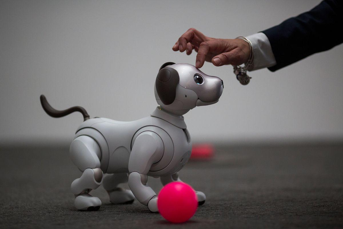 В Японии похоронили cобак-роботов Aibo