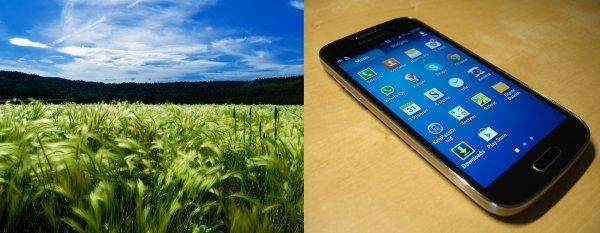 Новое приложение для фермеров повысит урожай в несколько раз