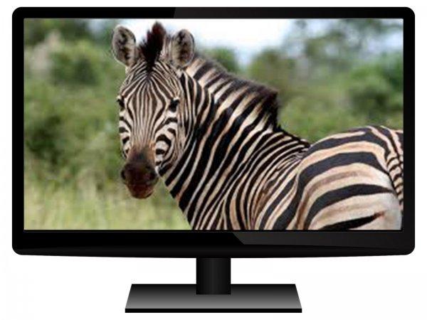Windows 10 ломает мониторы! Новое обновление вызывает «зебру» на экране