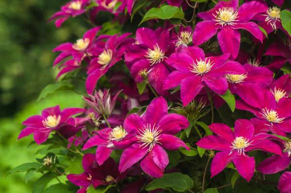 Цветы, саженцы, деревья и кустарники – отличный посадочный материал