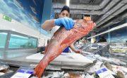 Заказать охлажденную рыбу в Москве