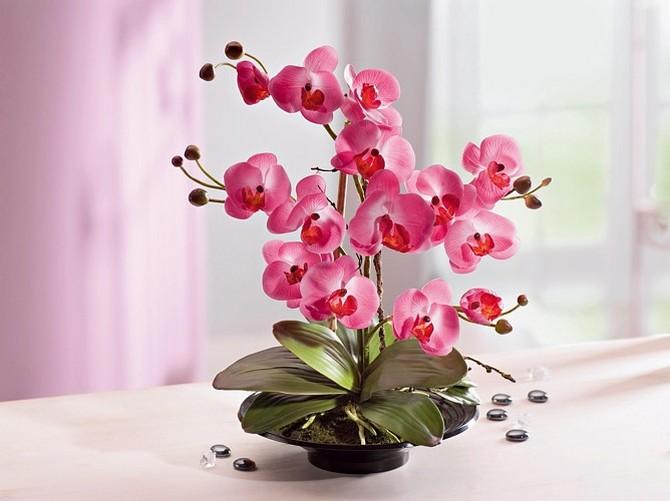 Свежие и красивые орхидеи в Рязани по выгодным ценам